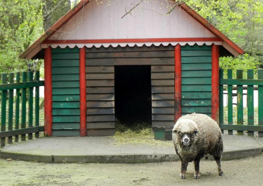 żabiński dyrektor zoo
